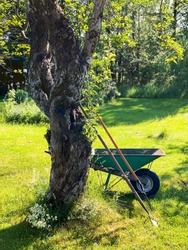 Wheelbarrow and gardening tools by fruit tree in old garden. Warm evening sunlight in August. Sweden, Scandinavia.