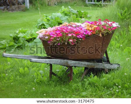 Wheelbarrow filled with flowers as garden decoration in Skagway, Alaska