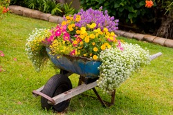 Wheelbarrow full of colorful flowers on a grass lawn