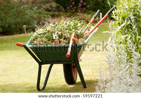 Wheelbarrow into which garden has has been putting results of seasonal cut-backs.