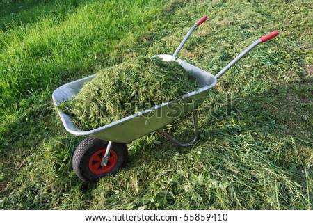 wheelbarrow on a lawn with fresh grass clippings in summer