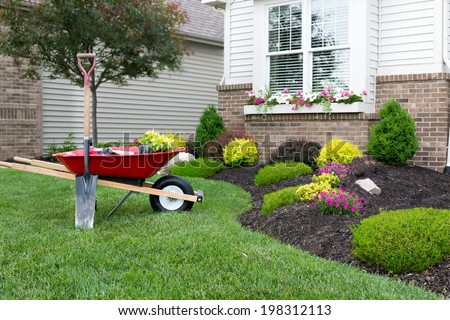 Wheelbarrow standing on a neat manicured green lawn alongside a flowerbed while planting a celosia flower garden around a house with fresh spring plants #198312113