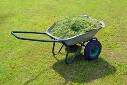 Wheelbarrow with cut grass