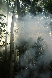 When smoke and sun rays become friends.