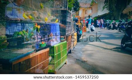 when the bird became a livelihood