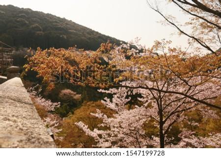 when travel in japan, wonderful japan
