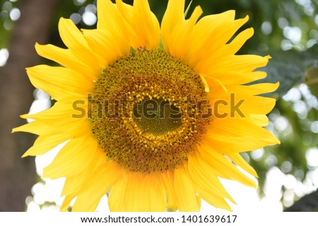 When you can't find the sunshine, be the sunshine #1401639617