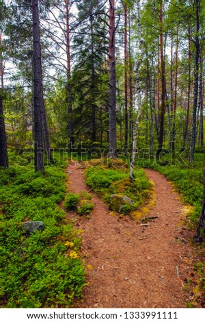 Where the path divides, closeup of path in forest #1333991111