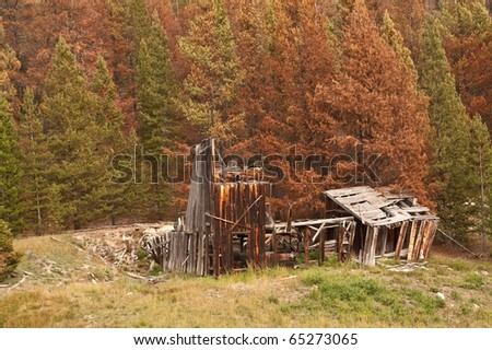 Which will come first for this long-abandoned building?  Fire from the beetle-killed pines or full collapse from vandals and weather?
