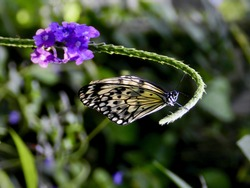 Whimsical Butterfly Hanging on a Purple Flower in a Botanical Garden