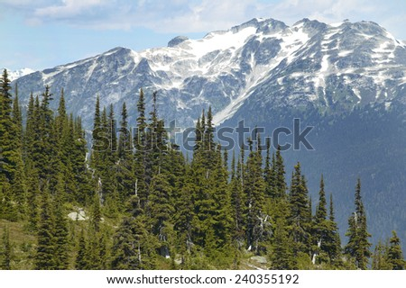 Whistler landscape with forest and mountains. British Columbia. Canada. Horizontal