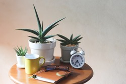 White alarm clock with three plant pots of  Sansevieria ,yellow coffee  mug, notebook and eye glasses on wooden table with morning sunlight,morning routine, self isolation, gardening concept.