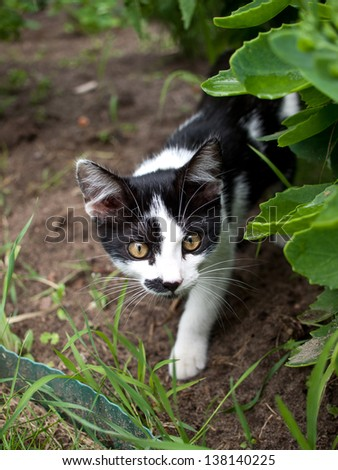 white and black cat peeking out from under the leaves