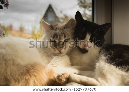 White and black cats lie on a windowsill in the sun