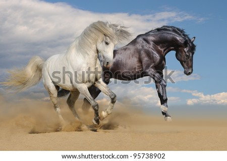 White and black horses galloping in desert