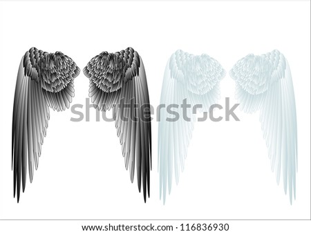 white and black wings isolated on white