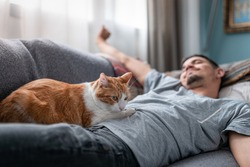 white and brown cat lying on top of a young man stretching his arms after sleeping