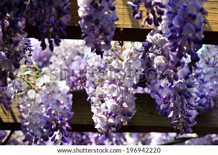 White and different shades of purple flowers hanging down.