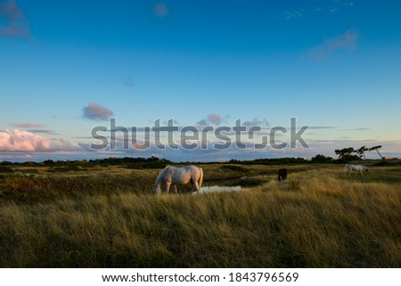 white and gray camargue horses in a pasture on the edge of the Atlantic Ocean in the bay of Bourgneuf-en-Retz, France , december 2019 Foto stock ©
