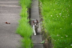 White and gray kid stray cats walking in the gutters of the road