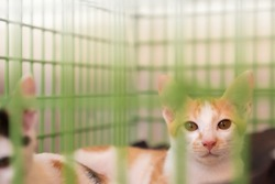 White and orange dirty kitten with blur black kitten in green cage background with sun orange light for copy space. Concept of adopt domestic animal.