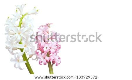 White and pink hyacinth flowers