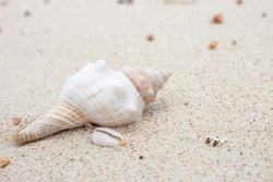White and pink seashell on the beach. Shellfish on the sand. Sea bottom close up. Small shell macro. Wild nature concept. Marine nature. Mollusk on the beach. Nature closeup. Summer vacations concept