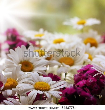 White and yellow daisies with some purple flowers
