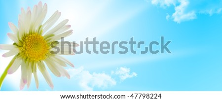white and yellow flower and sky whit sun on a white background - horizontal banner