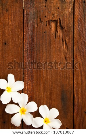white and yellow frangipani flowers with wood in background.