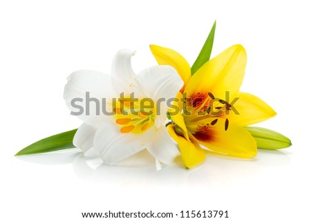 White and yellow lily. Isolated on white background #115613791
