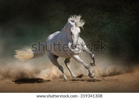 stock photo white andalusian horse in desert dust against dark background 319341308 - Каталог — Фотообои «Животные»