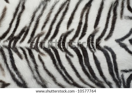 animal wallpaper tiger. White animal tiger fur,