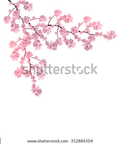 Stock Photo White apple flowers branch isolated on white background