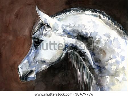 arabian horse wallpaper. arabian horse watercolor