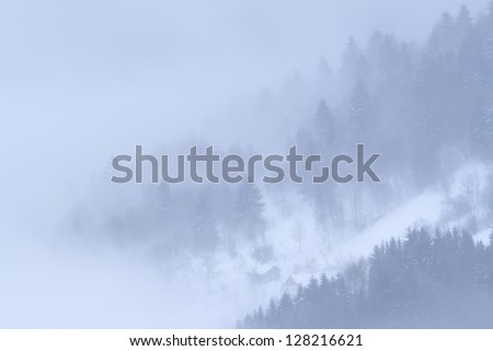white atmosphere in snowy winter mountain fir trees forest