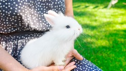 White baby rabbit in the arms of the girl. Thoroughbred dwarf decorative rabbit. Bunny as a pet. The home bunny sits in the hands of the hostess against the backdrop of a green lawn.