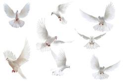 White background bird