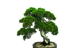 White background bonsai with personality