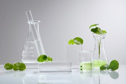 White Background Centella asiatica (gotu) for Biological experiment presentation Centella asiatica leaves and green water in biological test tubes. Production of cosmetics based on Centella asiatica .