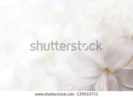 white background from flowers of lilac