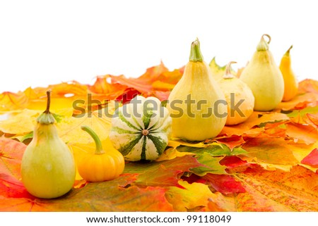 White background with fall leaves and pumpkins