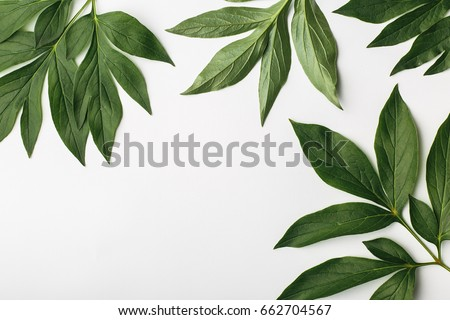 White background with green leaves, top view of a flat composition #662704567