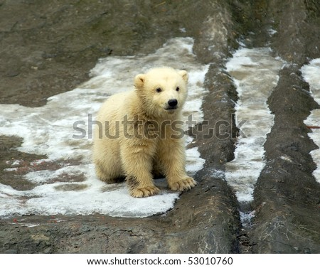 White bear cub - stock photo