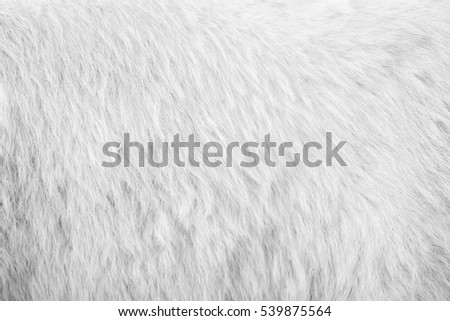 White bear hair texture background. Line wool gray floor with top light. Art brown sepia vintage backdrop. Seamless pattern.
