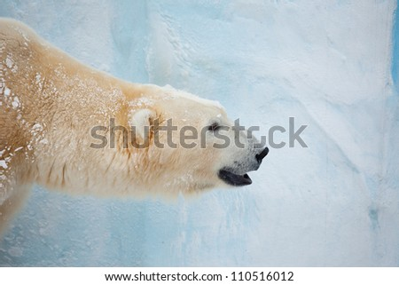 white bear head portrait on light background