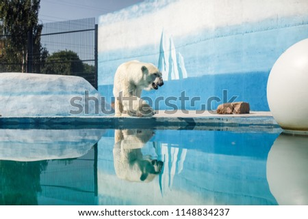 white bear in the zoo, swimming under the water #1148834237