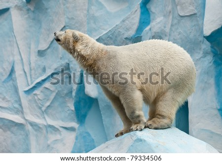 white bear stand on stone
