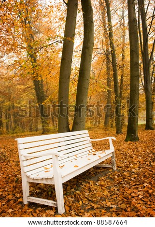 White bench in autumn beech forest