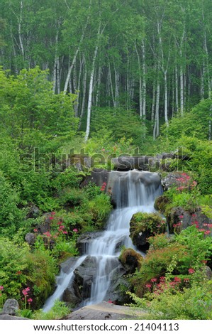 White birch and the waterfall of the fresh green